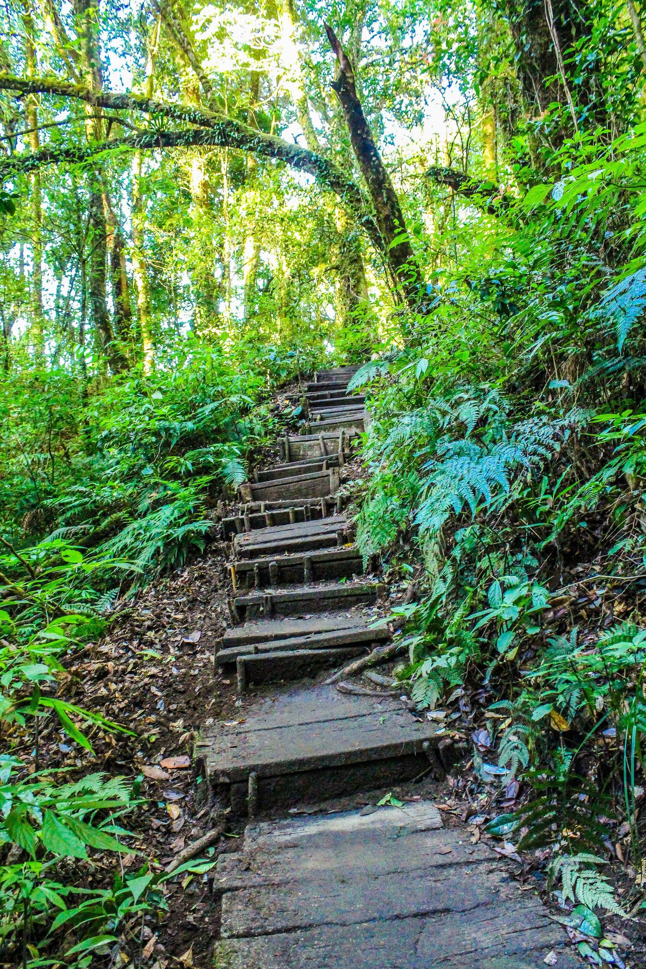 random stairs in the woods