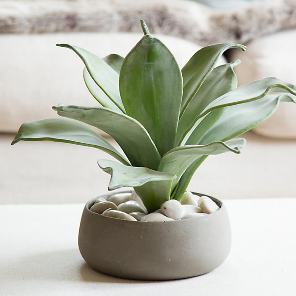 house plant ideas