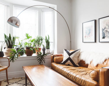 house plant ideas