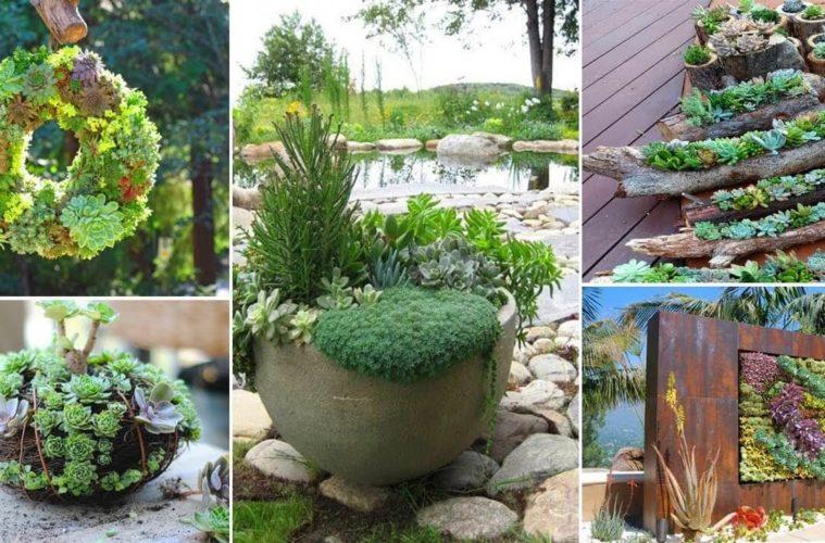 15 Outdoor Succulent Garden Ideas On Budget