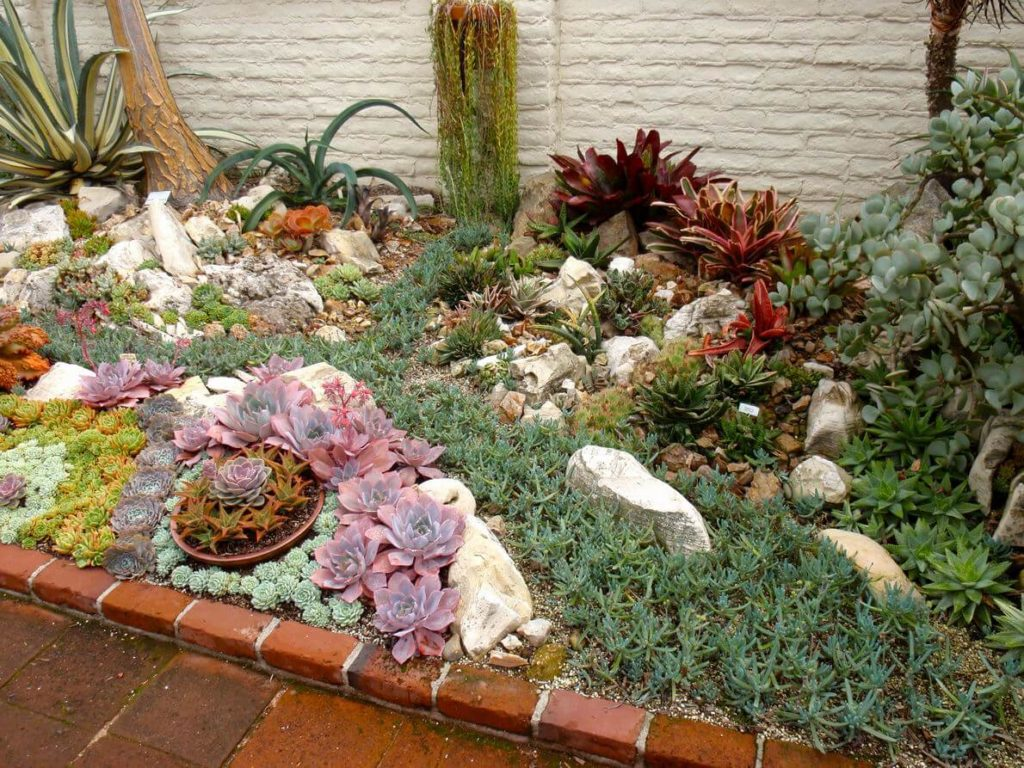 succulent garden ideas outdoor