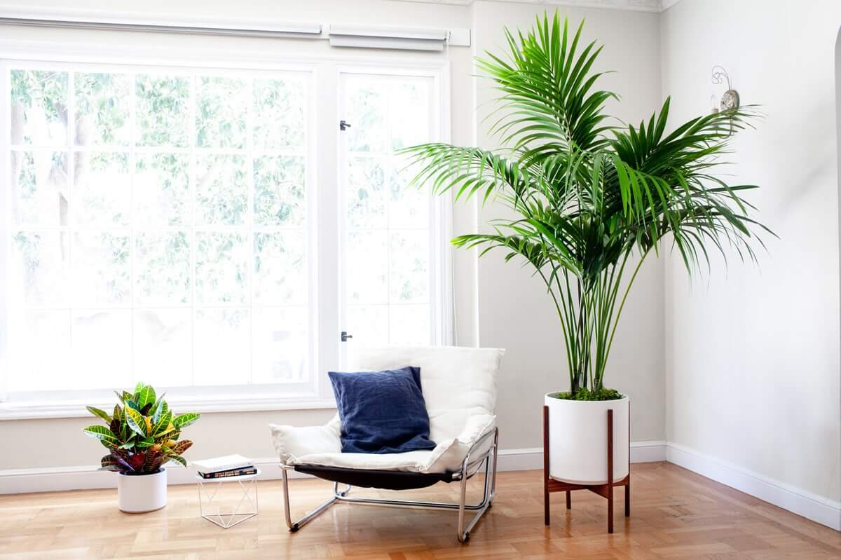 21 Tall Indoor Plants With Big Leaves The Architecture Designs