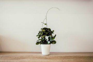 Best Suitable Low Light Indoor Plants For Darker Corners
