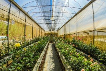 How to use a greenhouse for Beginners guide