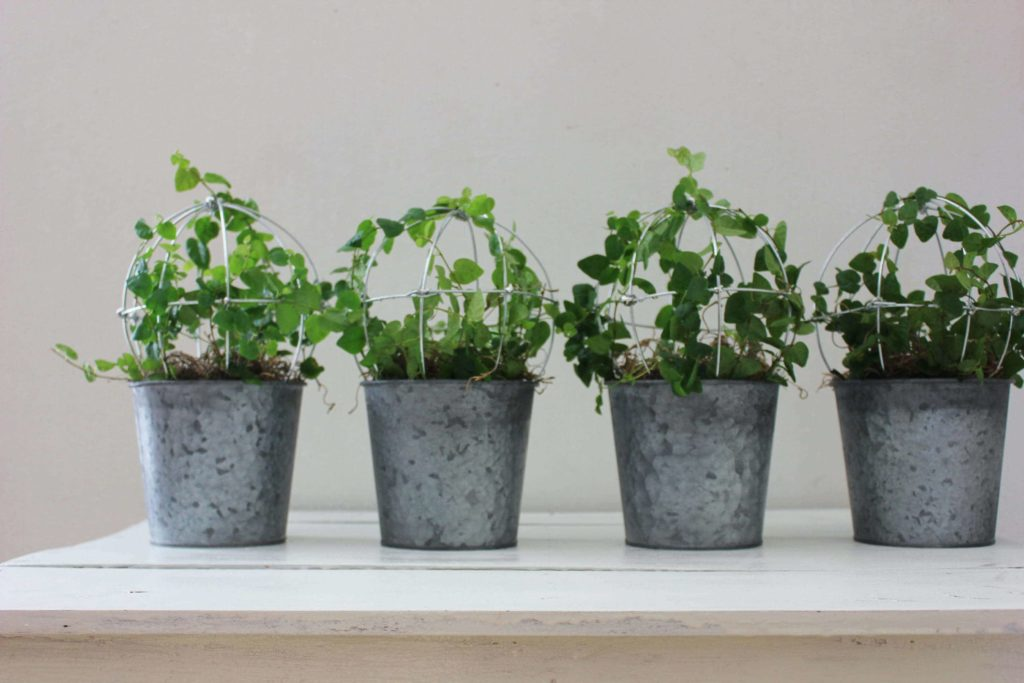 low light indoor plants for darker corners - Creeping Fig