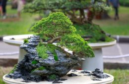 Bonsai Feature Image