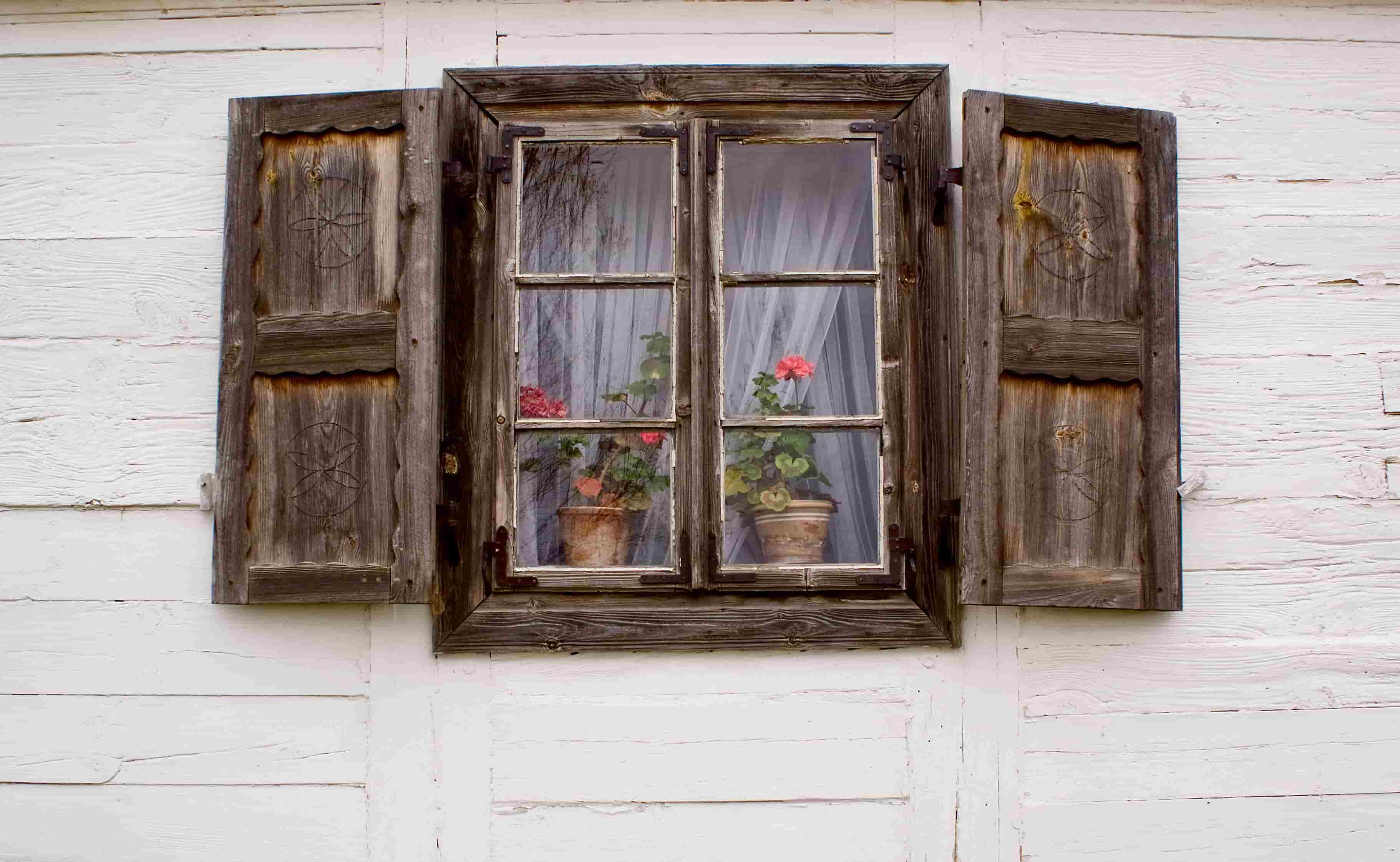 Flowers_in_the_window 4