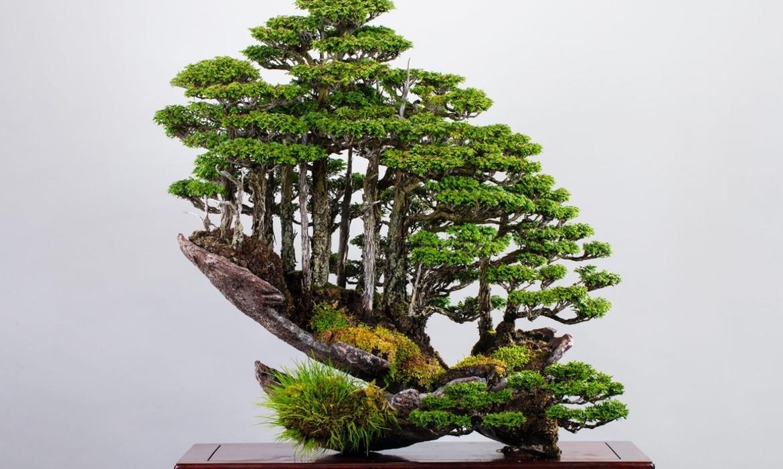 Masahiko Kimura Bonsai 15