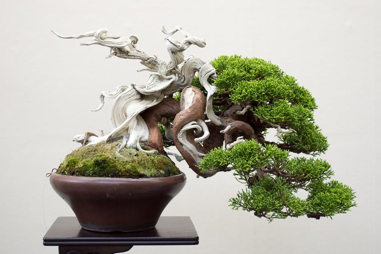 Shohin Bonsai 1