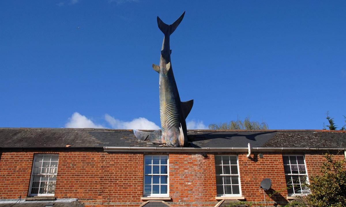 18 Shark Attack Home