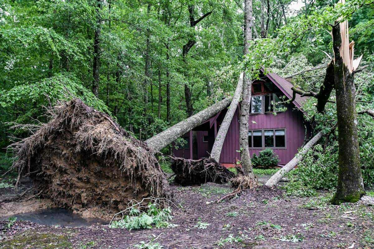 Tree remove 1