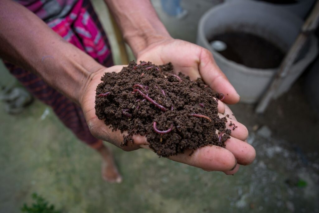 Apply Vermicompost