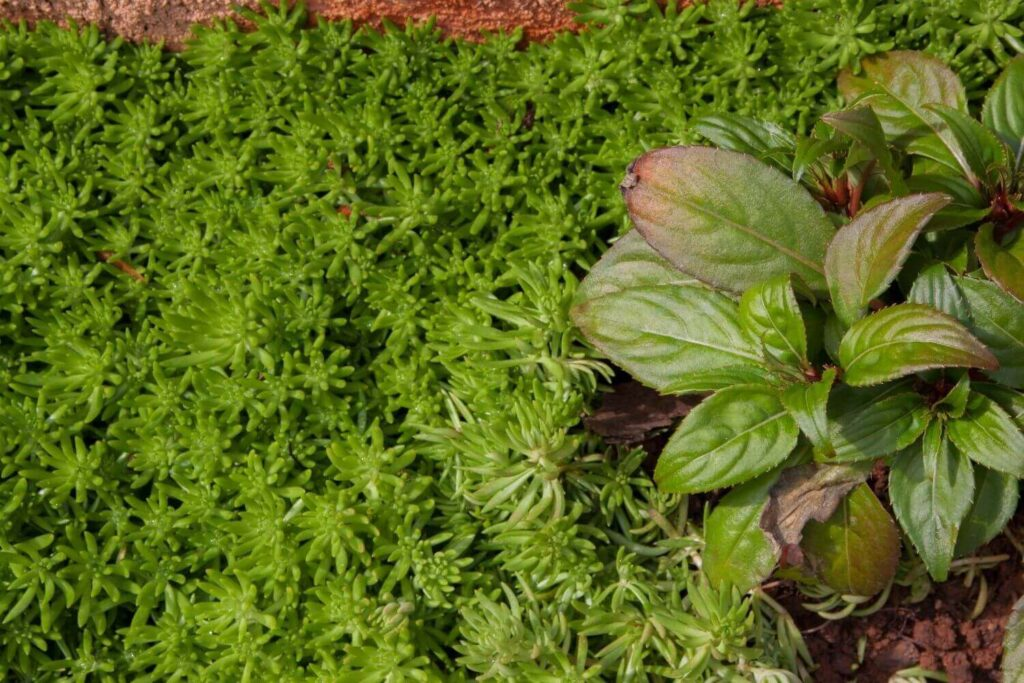 Grow Cover Crops