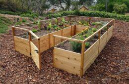 vegetable in garden