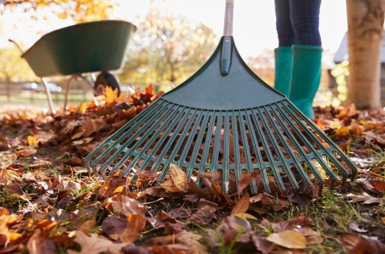 Fall Lawn Prep