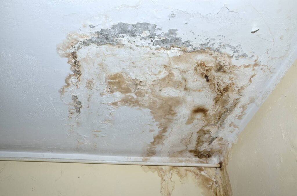 Mold in Your Home