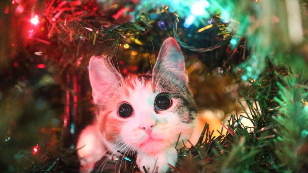 Chirtmas-Ornaments-8-pet-ornaments