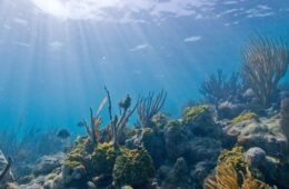 Miami Underwater Park 6