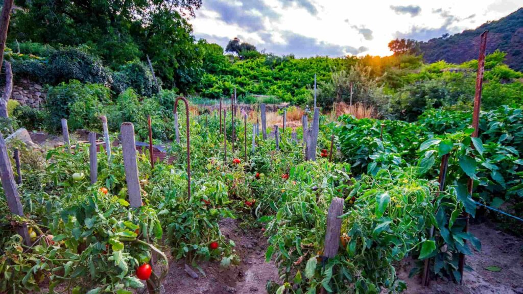 Garden Inviting