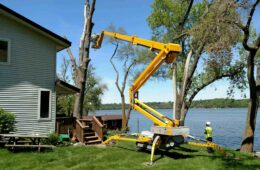 Professional Tree Removal Services
