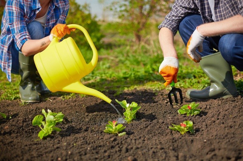 Tips for Leveling Up Your Gardening Skills