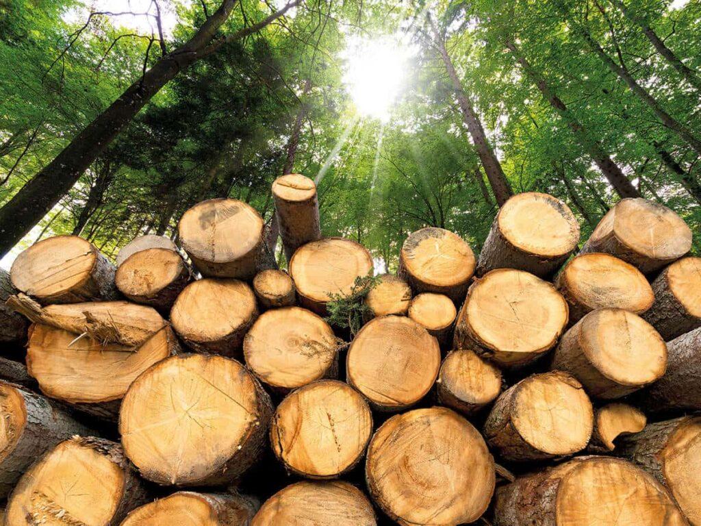 Biomass 1