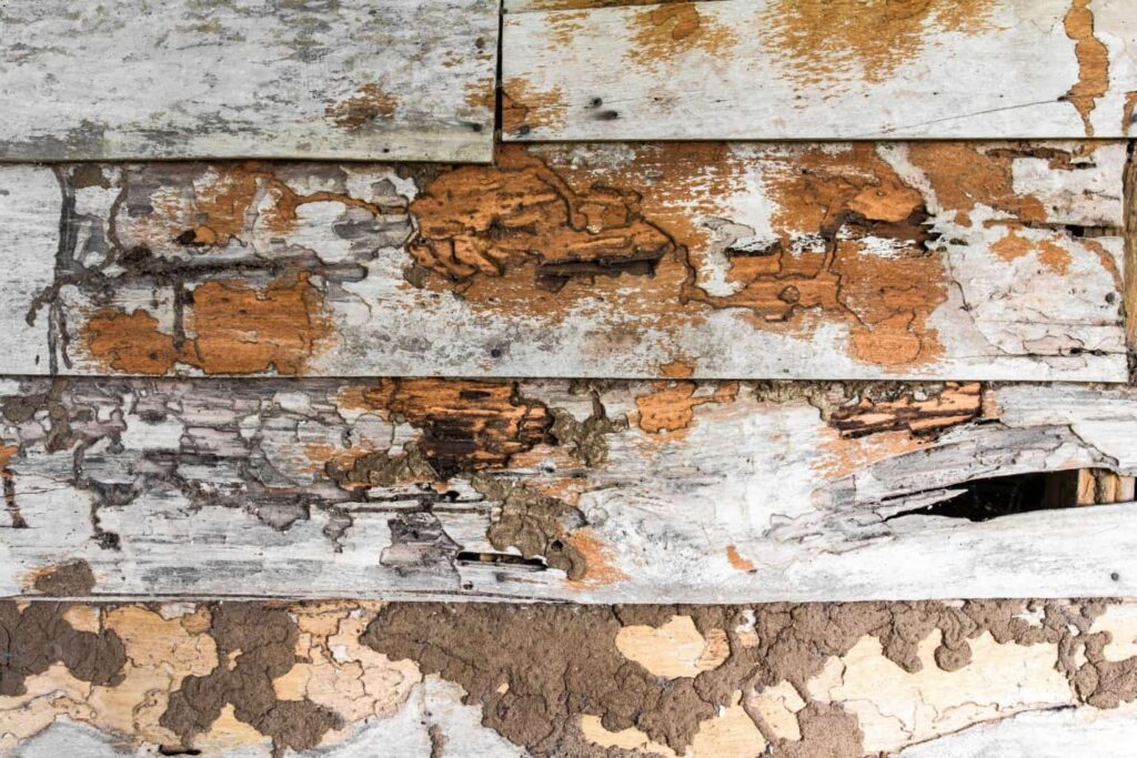 How Do You Know If You Have A Carpenter Ant Infestation