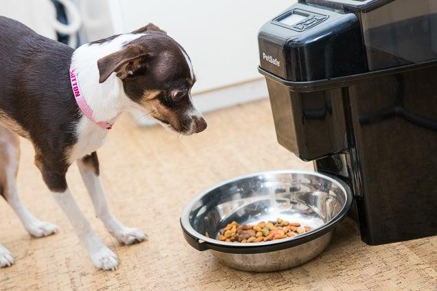 Pet Supply Storage Ideas
