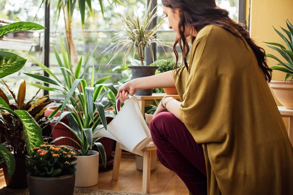 Tips to Care For Your Mail Order Plants