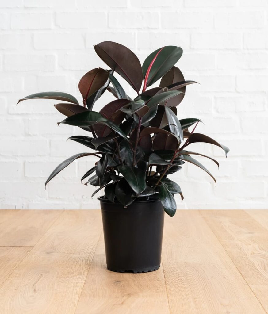 add plant in apartment
