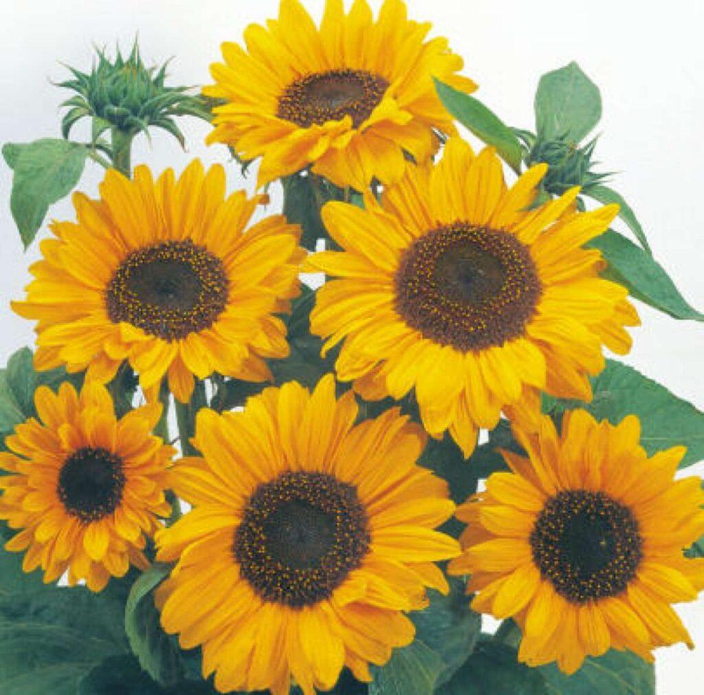 pet friendly flowers
